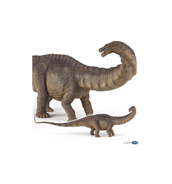 """Apatosaurus ( meaning """"deceptive lizard"""") is a brown dinosaur of the herbivorous sauropod dinosaur that lived in North America during the Late Jurassic period."""