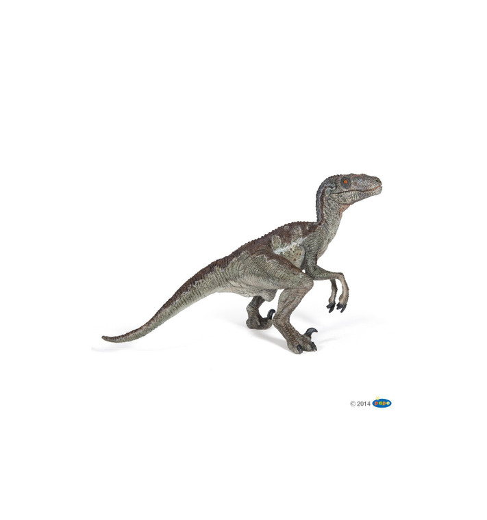 """Velociraptor ( meaning """"swift seizer"""" in Latin) is green and a genus of dromaeosaurid theropod dinosaur that lived approximately 75 to 71 million years ago during the latter part of the Cretaceous Period."""