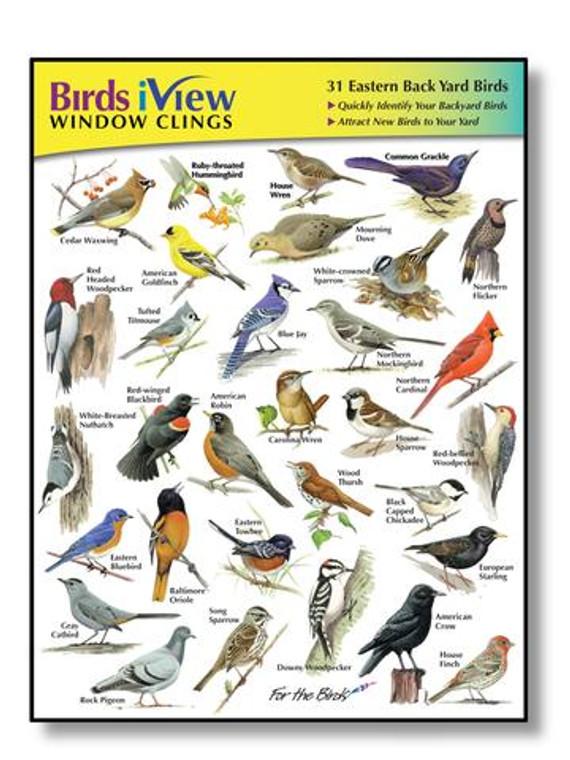 31 vivid sticker of Eastern backyard birds
