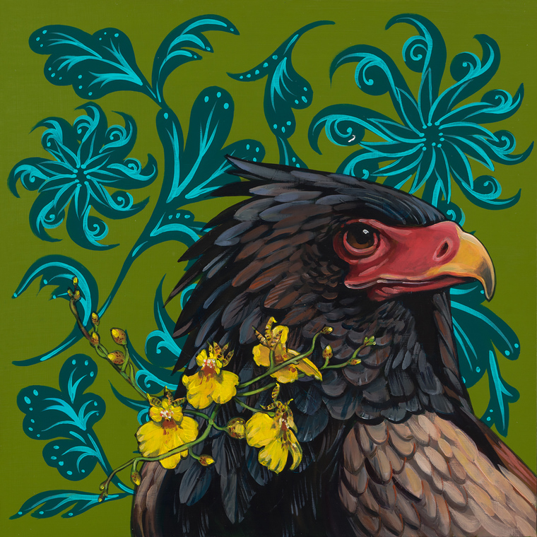 Bateleur Eagle on Olive