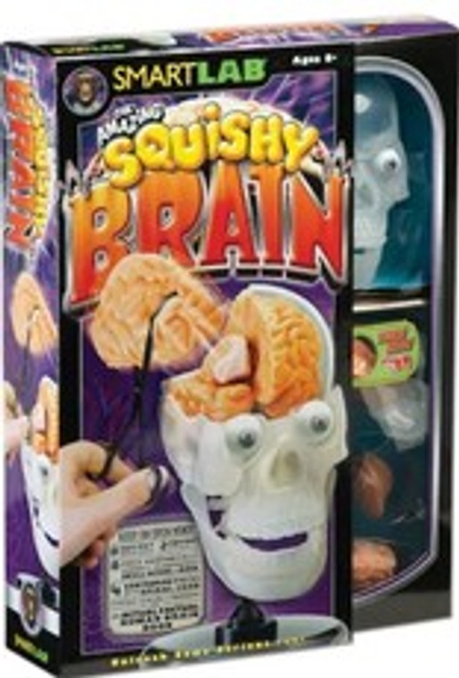 This image shows a box with a light blue background. There is a clear panel with a plastic model of a clear head displaying a Brain and Skull parts.