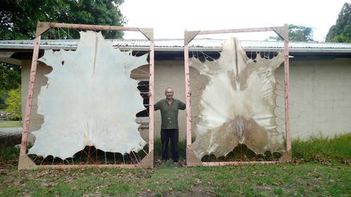 David with his hides that he makes into drums.