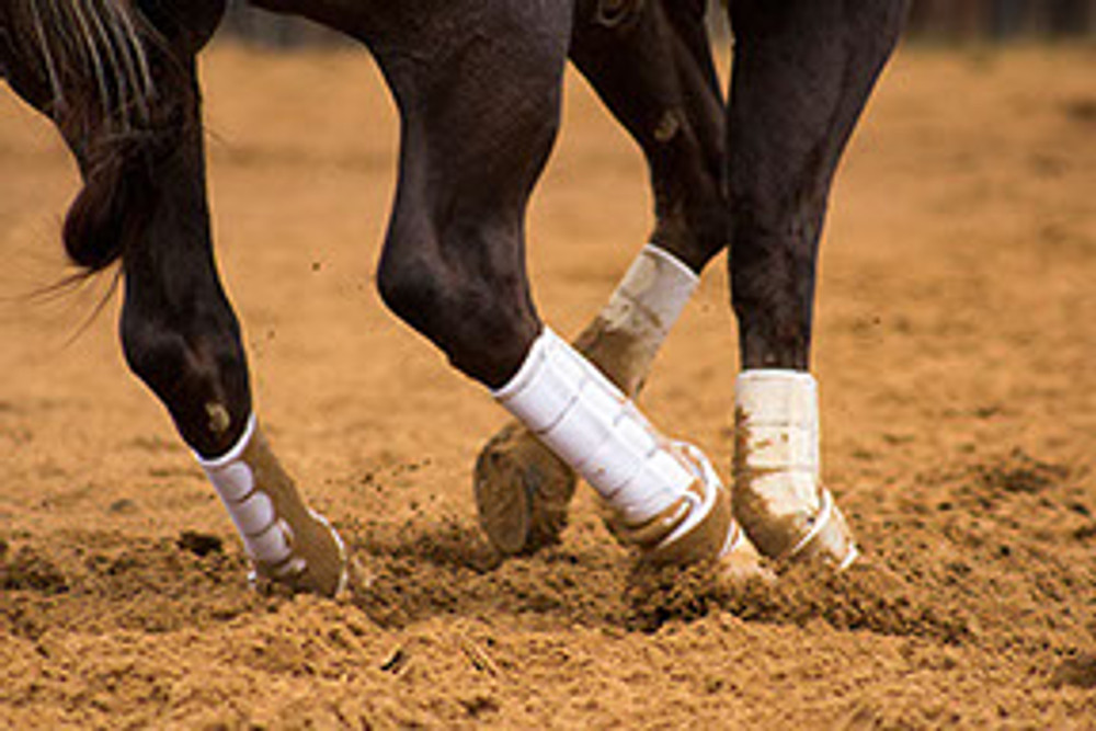The extra height of this new boot will help to save the upper suspensory ligament from injury during these strenuous performance maneuvers. The Iconoclast® Extra Tall Orthopedic Sport Boots features four upper straps in addition to our patented Double Sling Straps® which wrap around the base of the fetlock, lifting and cradling it with unparalleled 360-degree lateral support. Iconoclast® Boots provide properly balanced support to the vertically moving tissue of the equine leg.