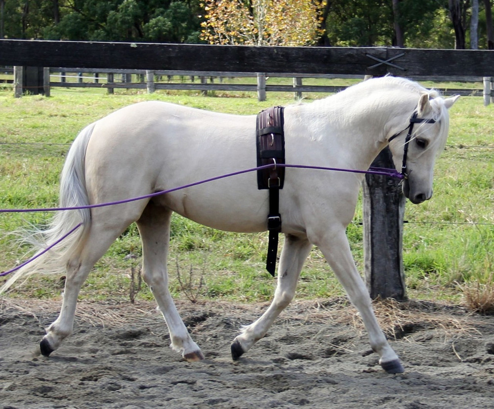Pony Size - Ideal for Yearling, Breaker or medium ponies  Actual leather roller – 1 meter Min girth adjustment – 1.3m Max girth adjustment – 2.5m