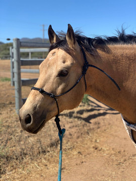 Full 4-knot training halter (lead sold separately)