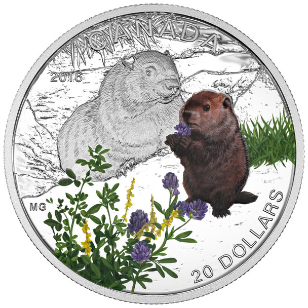 2016 $20 FINE SILVER COIN - BABY ANIMALS: WOODCHUCK