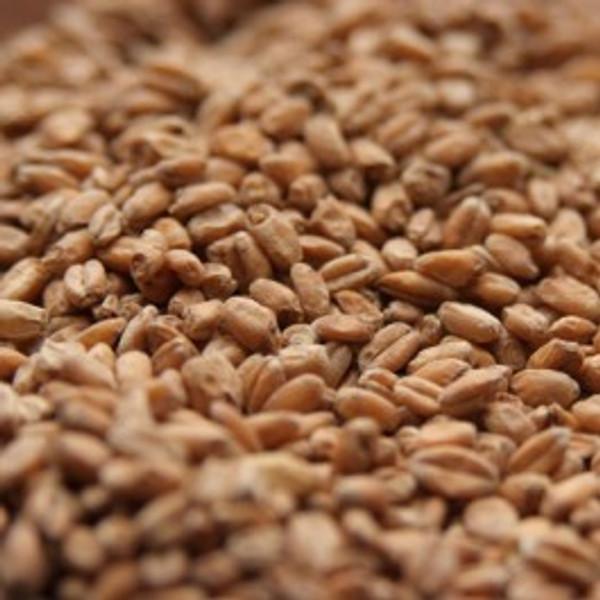 American Torrified Wheat | 1/4 lb (4oz)