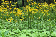 What's New in Sally's Pollinator Garden