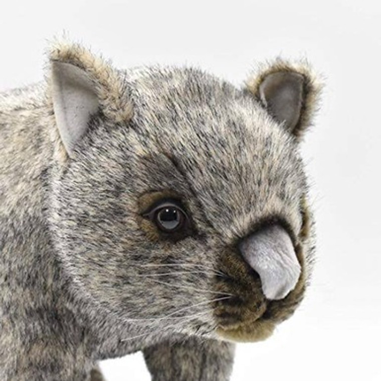 Wombat (37cm)