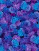 Cotton Print Yarmulkes Packed Hydrangea - BLACK