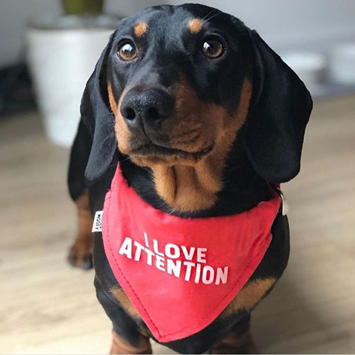 I Love Attention Reversible Bandana