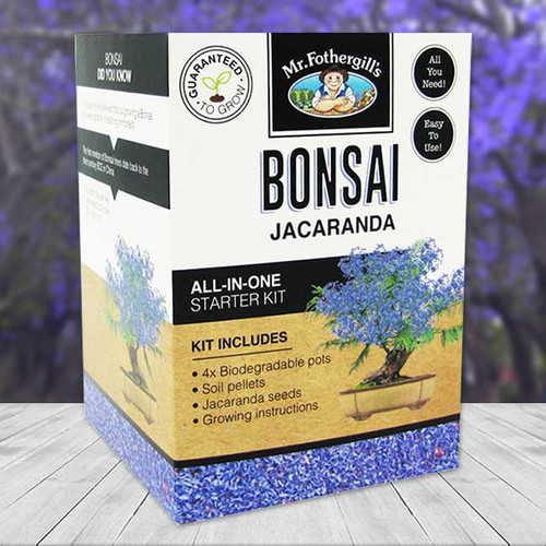 Jacaranda Bonsai Starter Kit