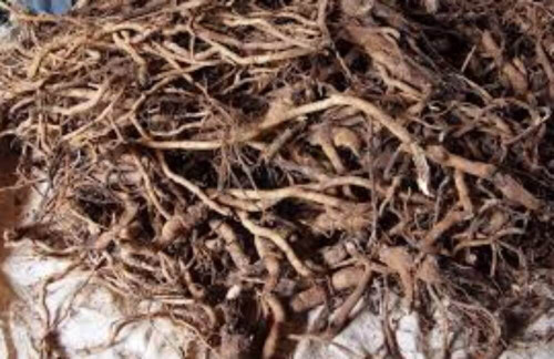Kava Root Extract