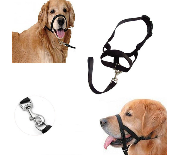 Black Dog Head Collar