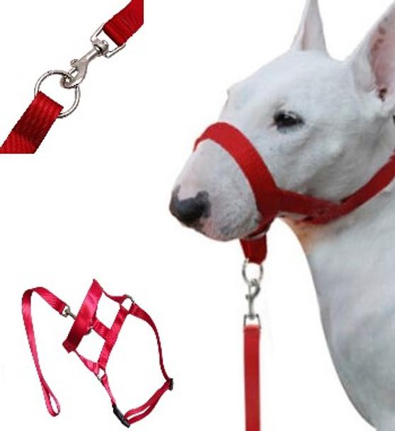 Red Dog Head Collar