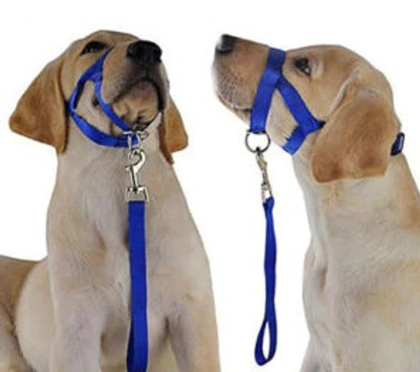 Blue Dog Head Collar