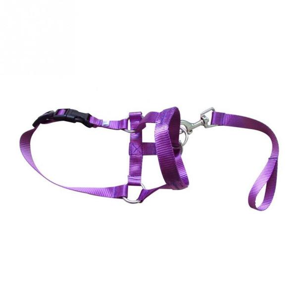 Purple Dog Head Collar