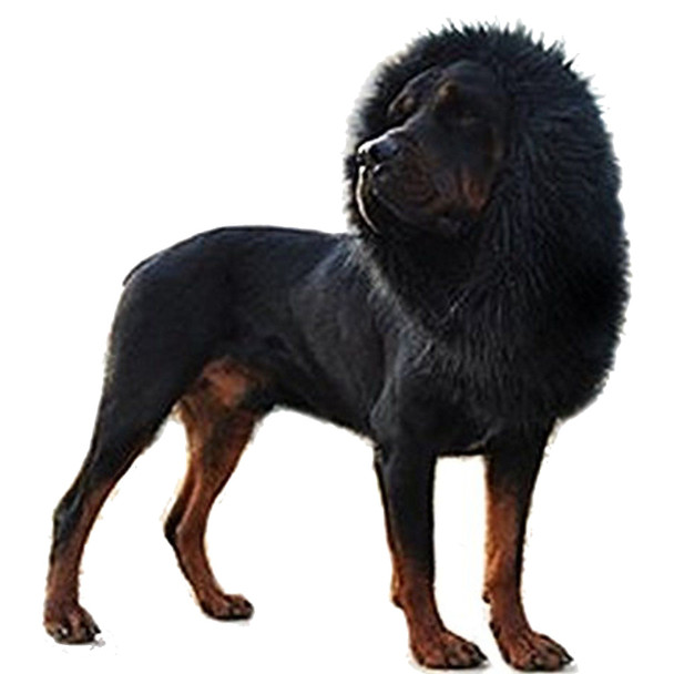 Black Lion Mane Dog Wig