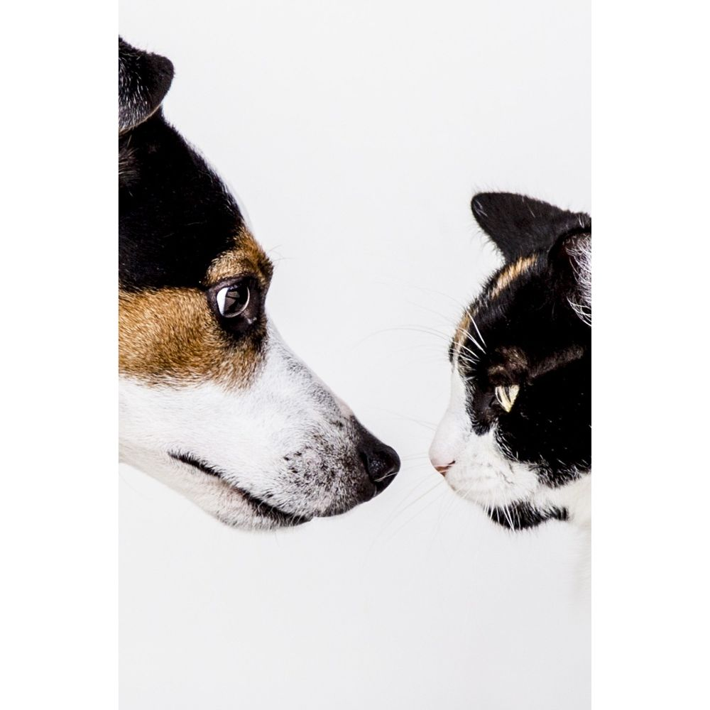 Drontal Wormers For Cats And Dogs Wormers Direct