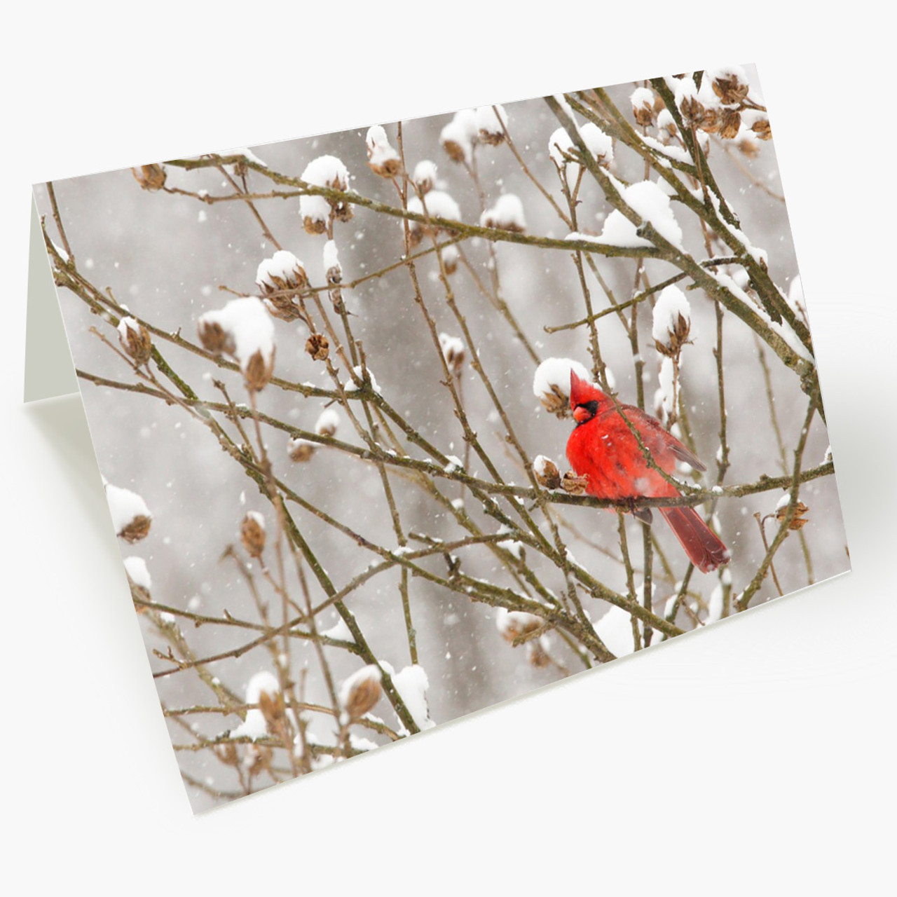 Cardinal In Snowstorm Christmas Card