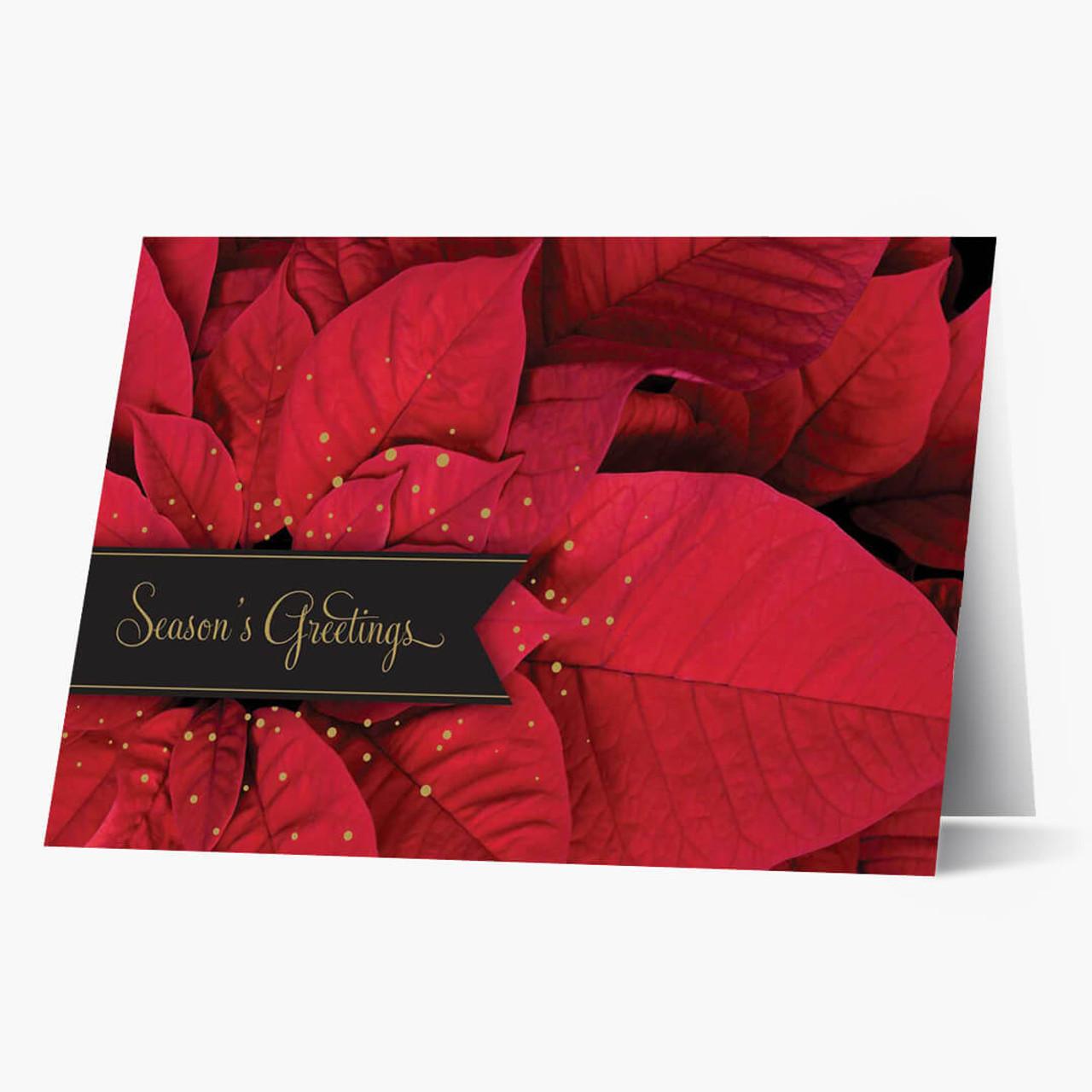 Picturesque Poinsettia