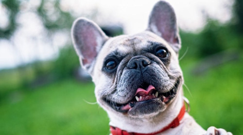 Charity Spotlight: Animal Cancer Foundation