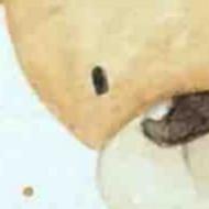 Watercolor Practice | Showcasing Bear and Honey