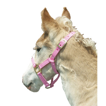 INTREPID INTERNATIONAL Pink Foal Halter (085000FP)