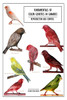 Fundamentals of Color Genetics in Canaries: Reproduction and Control