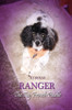 Ranger the Toy French Poodle