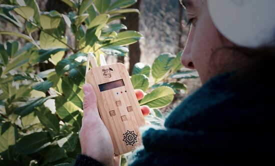 Music of the Plants - Bamboo Regular