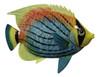 Dusky Tropical Fish Beach Bath Ocean Child Wall Decor 6 inch TFW10