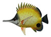 Big 12 Inch Tropical Fish Tiki Sea Life Bath Wall Decor Long Nose Yellow 12TFW19