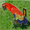 Tropical Exotic Bird Scarlet Macaw Parrot 12X8 Ceramic Art Tile