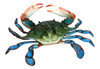 6 Inch Maryland Blue Crab Beach Wall Decor Resin