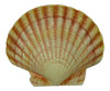 Tropical Sea Shell Wall Tiki Bar Nursery Bath Decor 6 inch SSW09