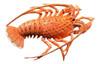 10 Inch Florida Lobster Beach Tiki Bath Kid Wall Decor Plaque Salmon Color