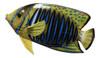 Tropical Fish Wall Tiki Bar Nursery Bath Kid Wall Decor Blue Stripe 6 inch TFW40