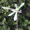 http://d3d71ba2asa5oz.cloudfront.net/32001096/images/dragonfly__1.jpg