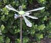 http://d3d71ba2asa5oz.cloudfront.net/32001096/images/dragonfly__2.jpg