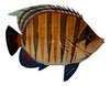 Blue and Orange Tropical Fish Wall Decor 6 Inches Two Dimensional Painted Resin