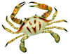 6 inch Florida Stone Crab Beach Tiki Bar Wall Decor