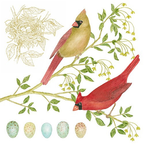Cardinals on Tree Branch Flour Sack Kitchen Towel Cotton