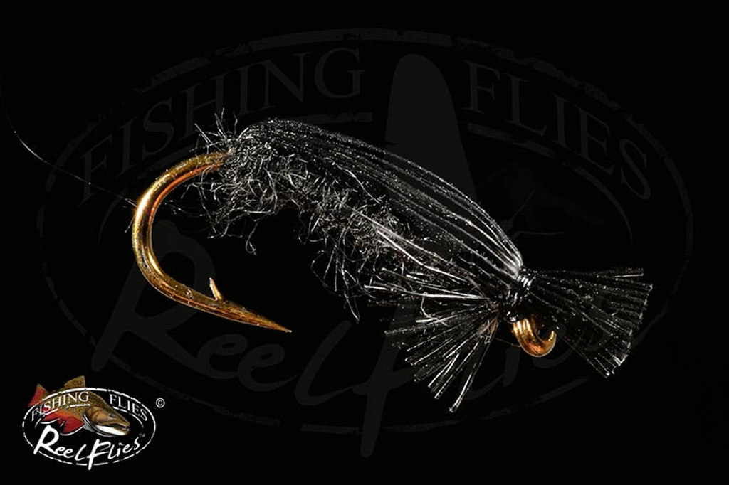 Black Beetle FlyBlack Beetle Fly