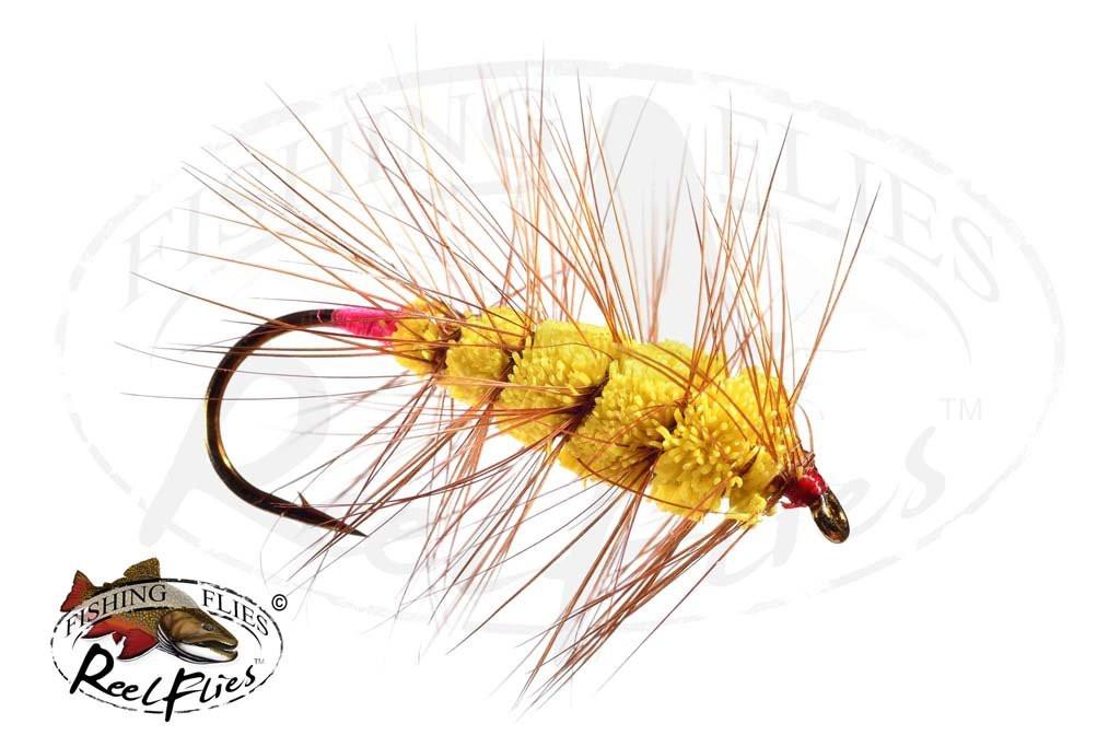 Yellow Buck Bug
