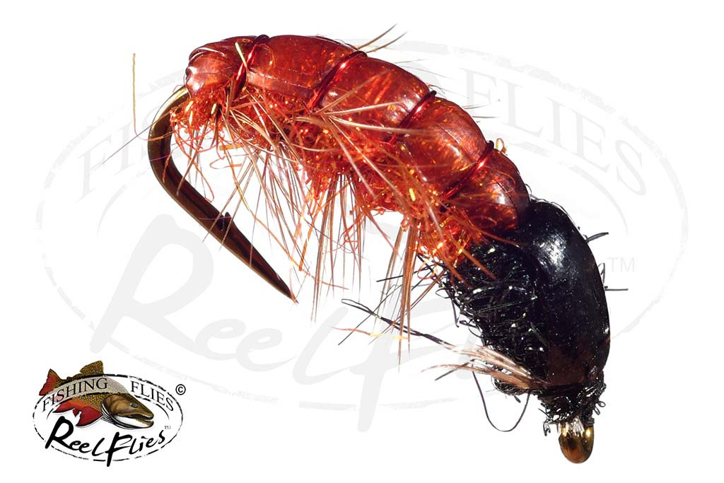 Rocky Mountain Pupa Orange