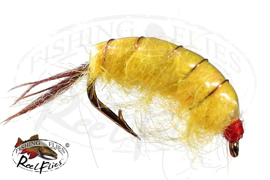 Bighorn Scud Yellow