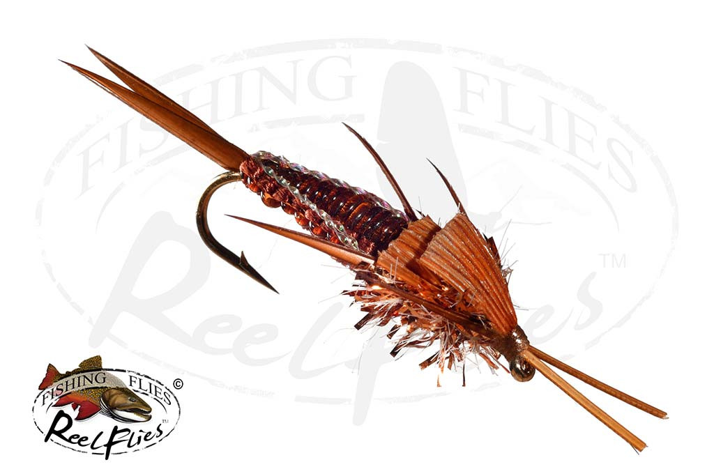 Brown Woven Stonefly