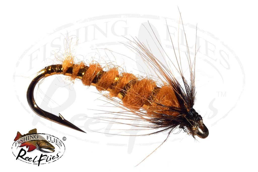 Orange Fish Hawk