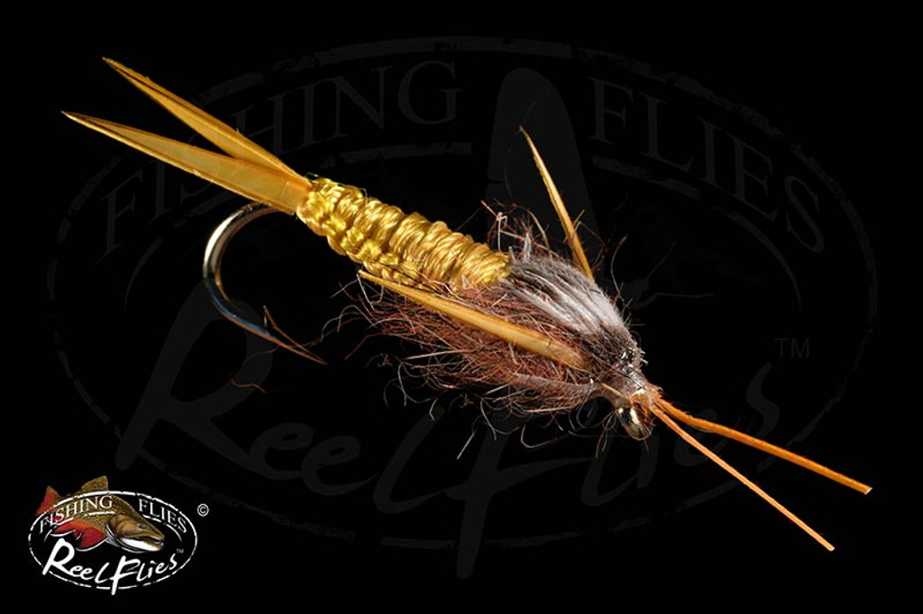 Golden Braided Stone Fly